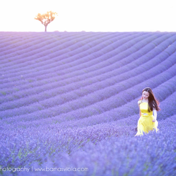 Lavender France Vacation Family Photography