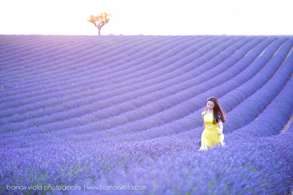 france lavender vacation family photography session