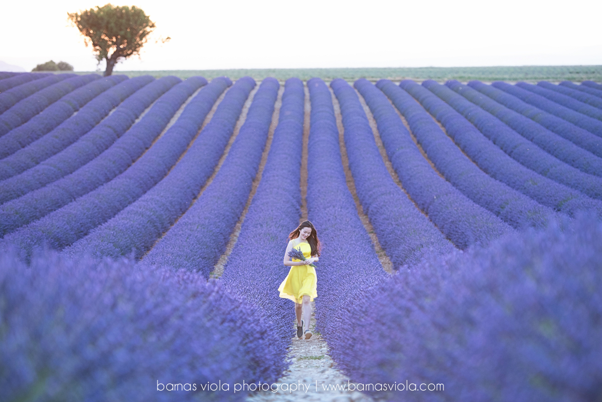 provence france switzerland sunflower lavender photography