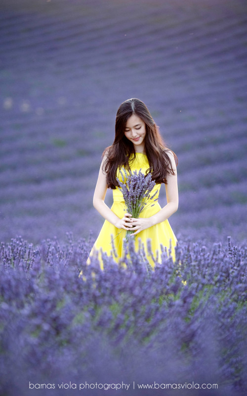 France Lavender Sunflower Vacation Family Photography